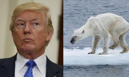 Los Osos se Mueren. La Vida se Acaba en el Artico y Trump Sigue Haciendo de las Suyas. No Esta Vez