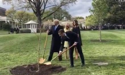 Mira lo Que Pasó Con el Árbol Que el Presidente de Francia Regaló a Donald Trump